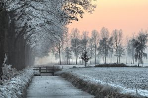 Trees along a canal 2 by Wil-028