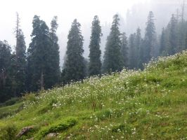 Toli Peer - Flower Bed by OmerTariq