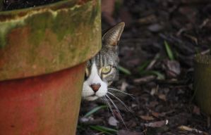 See me...? by clochartist-photo