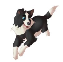 Border Collie by Takadk