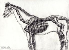 Horse Skeleton by Raeleven