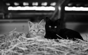 cat sisters by sys66