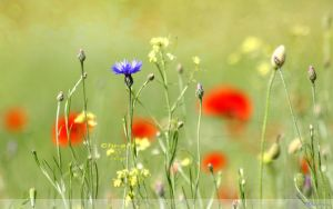 Summer Meadow Wallpaper by Clu-art