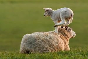 LeapFrogging Lamb by thrumyeye