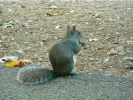Squirrel1 by Feawing