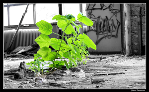 Plant in a room - color by Catching-Moments