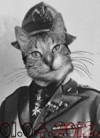 Dictator Cat by peppy-heppy