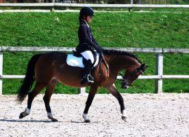 Competition dressage 7 by Driif