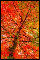 autumn colors X by glad2626