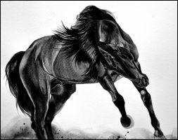 Painting- Lusitano Horse by Ennete
