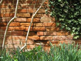 Red brick rot by mdu-ntr