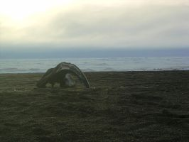 Whale skull on beach by Arctic-Stock