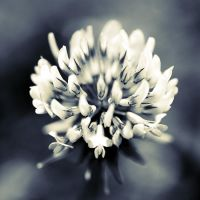 flower of chance by julie-rc