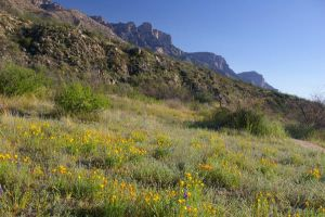 Pusch Ridge with Poppies by PatGoltz