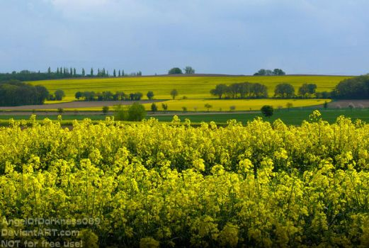 Canola Field Beauty in Germany - Summer 2017 by AngelOfDarkness089
