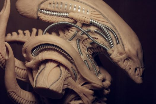 Alien concept detail by Skull-Droid