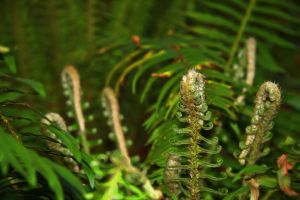 Ferns by iwonderbc