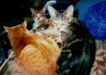 Cats hanging out by bluebellangel19smj