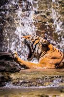 Tiger Falls by RoyalImageryJax
