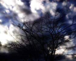the tree that watches the sky by davu1