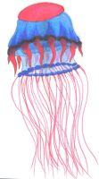 Jelly fish by Ddogg2287
