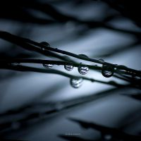 Drops On Needles by DREAMCA7CHER