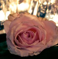 Soft rose. by Dipliner