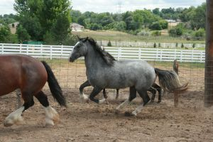 Blue Roan Stock 74 by tragedyseen