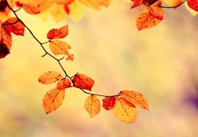 Autumn Leafs by samleenchoo