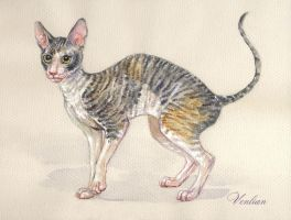 Cornish Rex commission by Venlian