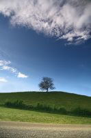 The lone Tree II by Osiris81