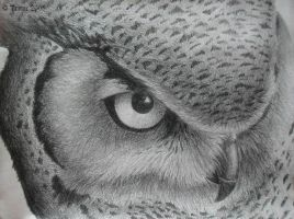 Owl by Carnivorr