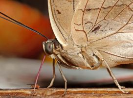 Close-up of a butterfly 04 by s-kmp