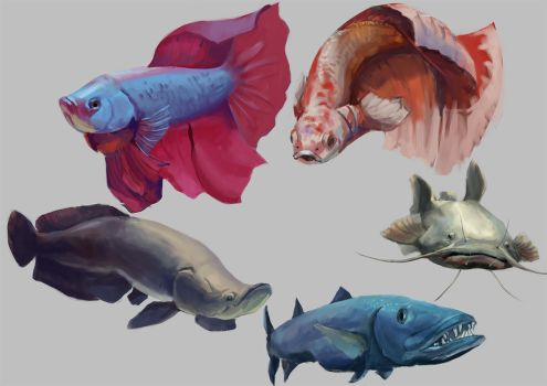 Fish Studies + Process by Windmaker