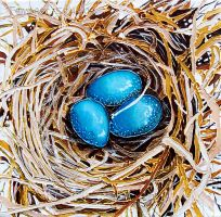 Robin Eggs Nest by TempestErika