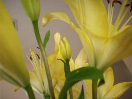 flowers 2 by mrs-isabella-cullen