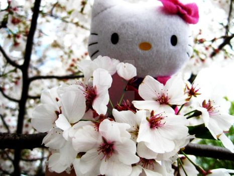 Sakura Kitty 2011 by demon-empress