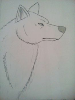 Wolf drawing by Darkwolfsilvia
