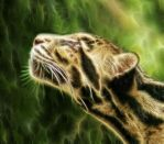 Clouded Leopard by Imagines