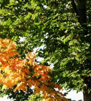 Autumn is approaching by LinMac
