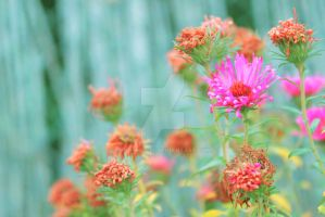 Pink Flowers by gb-photos