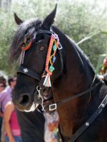 sant joan 2011 horse by EmberRoseArt