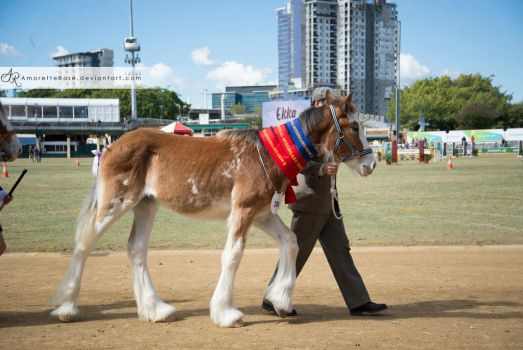 RQS Clydesdale #114 by AmoretteRose