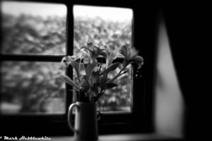 Lillies in the window by lensenvy62