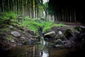 Follow the Stream by FlippinPhil