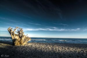 Wood at beach by Anto2b