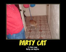 Party Cat by Ironhold