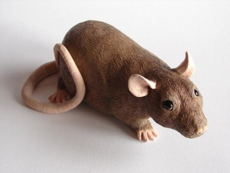 Fancy Rat sculpture rex rat pic 2 by philosophyfox