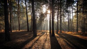 Horsell Common by Mohain