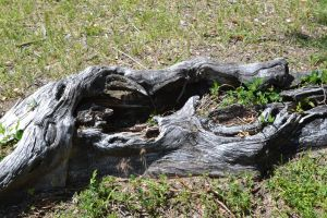 STOCK - Cool Tree Root by jocarra